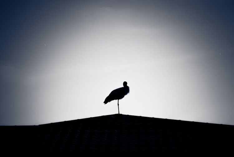 Low angle view of stork perching on roof against sky