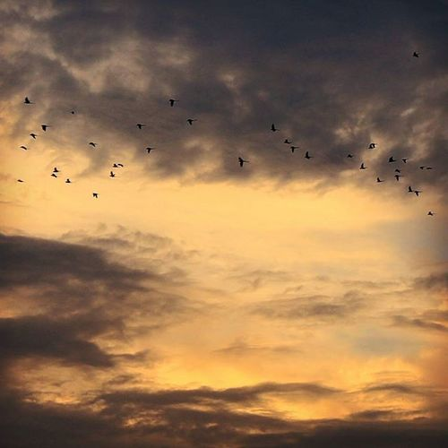 पंछी नदिया पवन के झोके इन्हें सरहद ना कोई रोके।Sunset Clouds Birds OnTheWayToHome Coloursofnature Canon Canon_official Canon_photos Canonphotography Canonindia Sunsetdiaries Indiapictures AnshumanShuklaPhotography