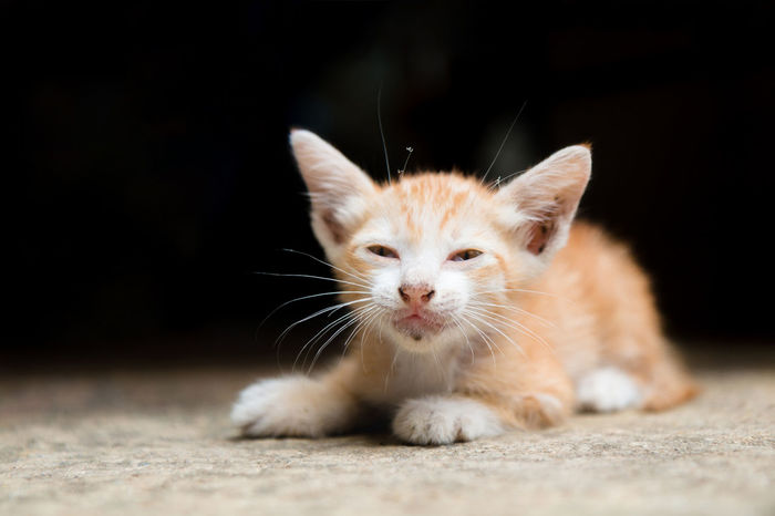 A Orange stray kitten (homeless cat) is hungry and lying on the warm floors with dark tone background. Animal Animal Themes Animal Wildlife Animals In The Wild Cat Close-up Domestic Animals Domestic Cat Feline Homeless Homeless Cats Hungry Kitten Kittens Looking At Camera Lying Down Mammal One Animal Orange Color Outdoors Pets Portrait Stray Animal Stray Cat Urban