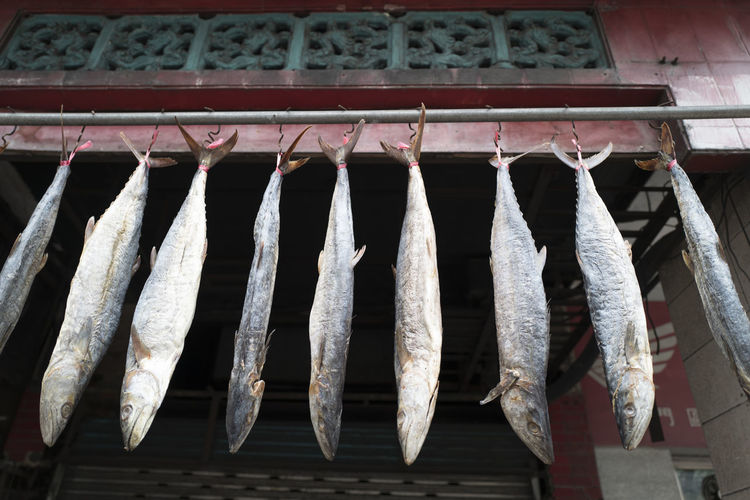 No People Hanging Food Seafood Day Fish Food And Drink Side By Side Vertebrate Animal Freshness Drying Low Angle View In A Row Large Group Of Objects Outdoors Raw Food