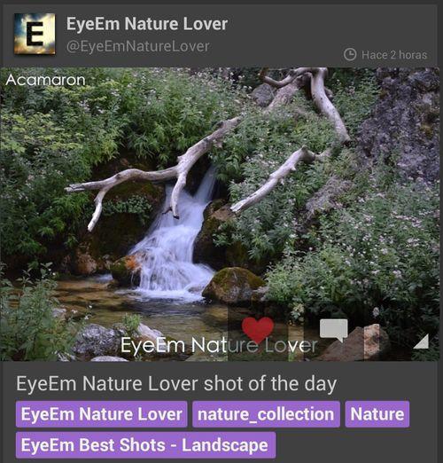 Muchisimas gracias al equipo de EyeEm Nature Lover y a su moderadora @kanjichu1 poe elegir mi fotografía como foto del día. Estoy realmente ilusionado y emocionado por dicha mencion. MUCHAS GRACIAS DE NUEVO y seguir por este camino. Haceis un gran trabajo!!! Enfocae Relaxing Nature