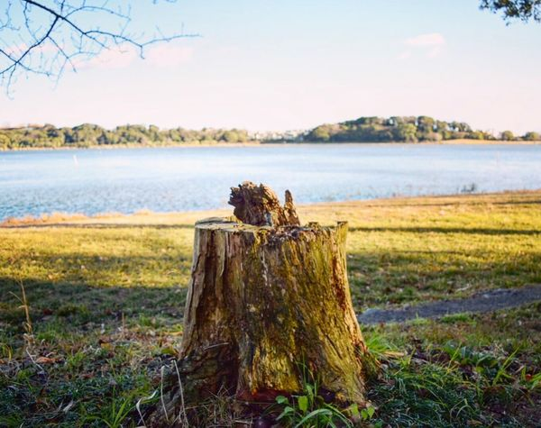 Photo Tree Stump Lake