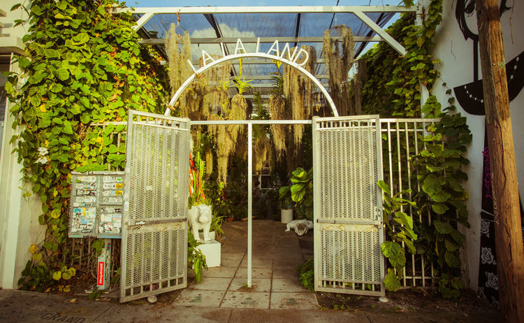 Architecture Day G Greenhouse Growth Ivy Nature No People Outdoors Plant Sunlight Tree Wynwood Art Walk