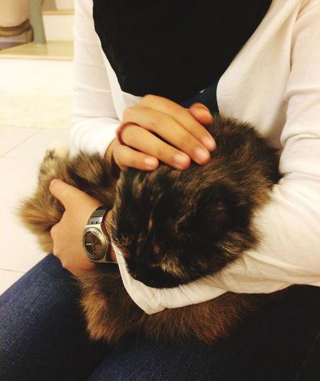 I love cats 😘🐈 Pets Cats Love BLackCat Orangpunya Expensive High Maintenance