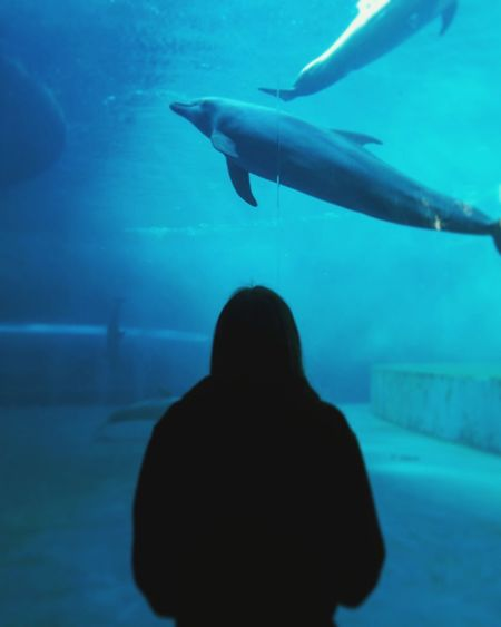 School trip Acquarium Acquario Di Genova Beautiful Nice Myself Dolphins Pretty Intelligent Animals Nature