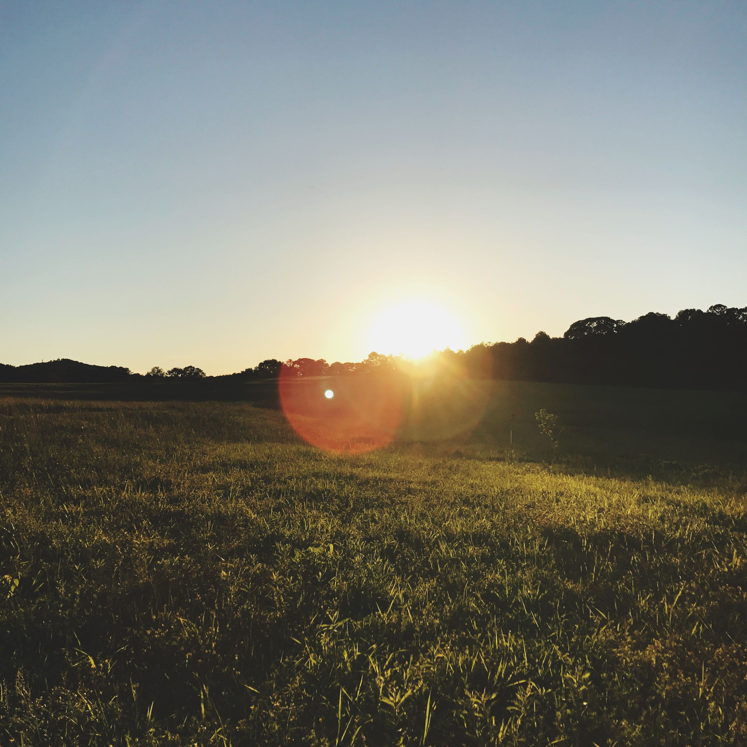 sunset, sun, sunlight, lens flare, field, nature, tranquil scene, beauty in nature, scenics, sunbeam, tranquility, no people, outdoors, landscape, grass, clear sky, silhouette, tree, sky, growth, day