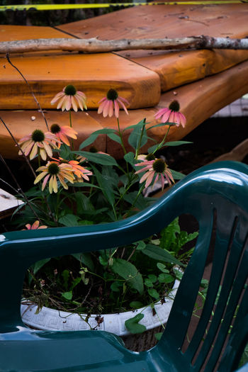 Close-up of flowering plants in boat