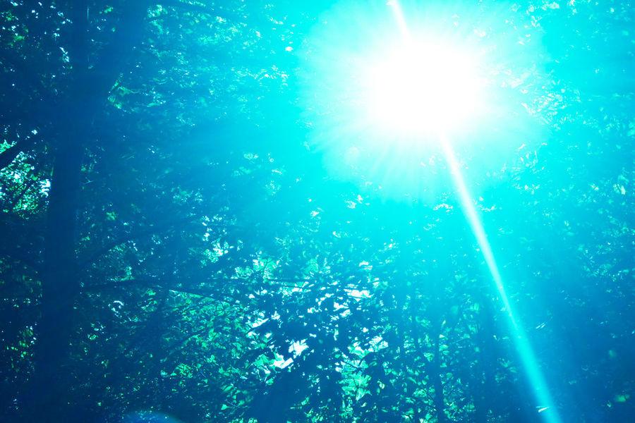 EyeEm Gallery EyeEm Nature Lover EyeEm Best Shots EyeEm Selects Eyeemphotography Trees Tree Light Beam Blue Arts Culture And Entertainment Sunlight Brightly Lit Sunbeam Sky Shining