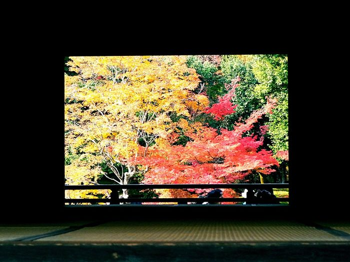天龍寺 額縁紅葉 Tenryuu-ji Pictureframe Autumn Colors Colors Of Autumn Japan Kyoto Autumn Leaves Ricoh