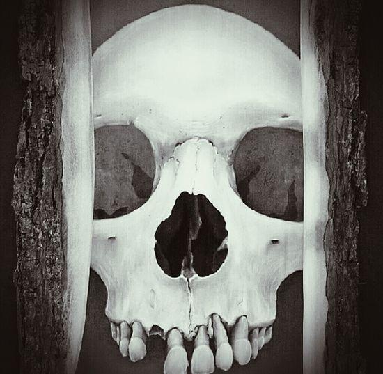 Skull Human Skull People Black And White HEAD Sick Gothic Skulls