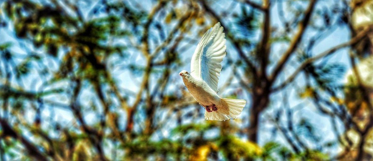 Beauty In Nature Newlife💛 Creative Light And Shadow Pictureoftheday Edit No Edit No Fun Birds🐦⛅ Bird Birdwatching Birds In Flight Bird Photography EyeEm Birds Birdporn Birds_collection :D