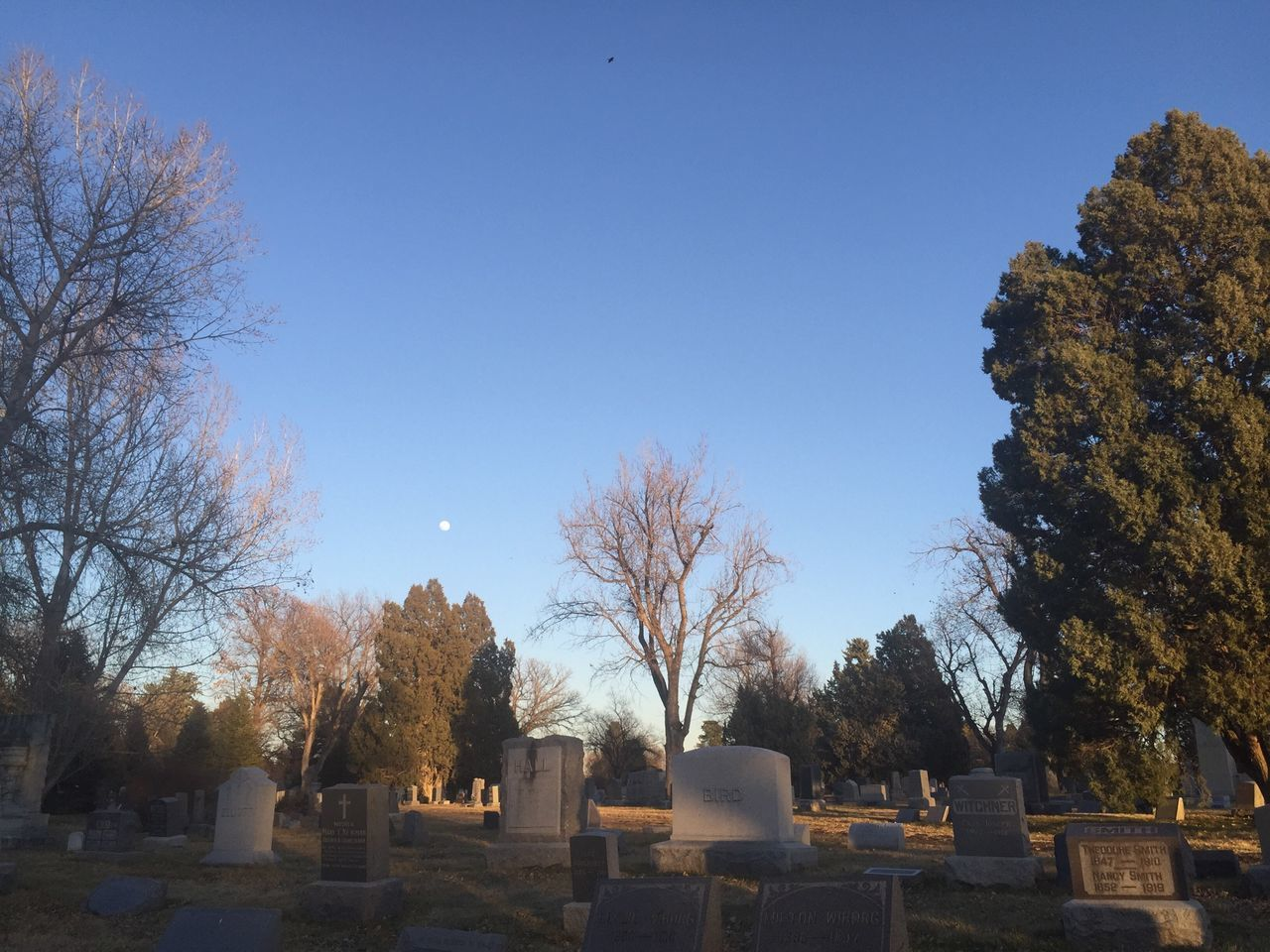 tombstone, cemetery, memorial, graveyard, gravestone, tree, the past, day, bare tree, nature, outdoors, no people, clear sky, tranquility, grave, sky