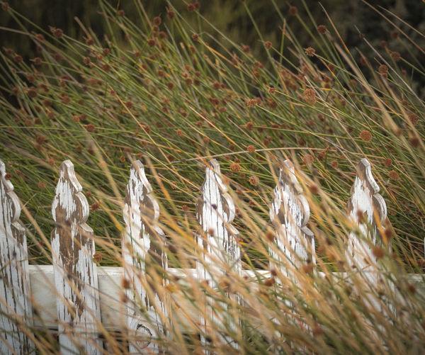 Calm Calmness Freedom Grass Morning Light Peace Twilight Calm Winds Fence Private Beach