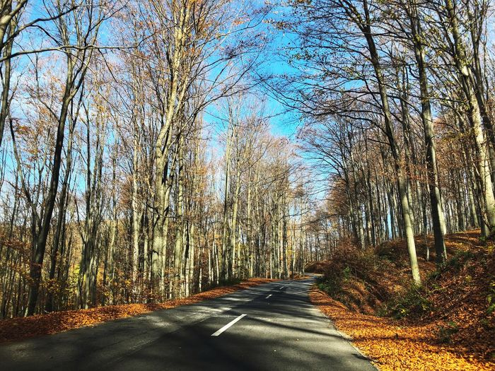 Road through