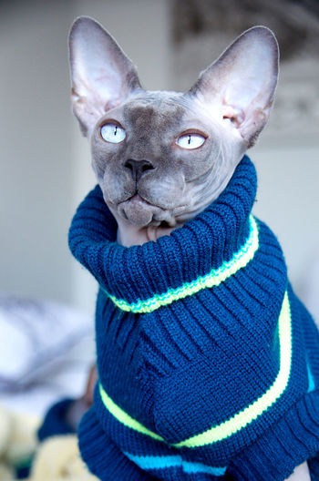 Close-Up Portrait Of Cat Wearing Sweater
