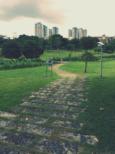Grass City Architecture Growth Tree No People Outdoors Building Exterior Nature Sky Day Steps Greenspace HDB Bishan Nature City Grass Park Leading Lines Snaking