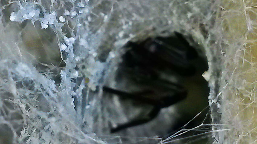 Better Run! LastBreath Spider Arachnid Beauty In Nature Close-up Lair Nature No People Outdoors Spider Web