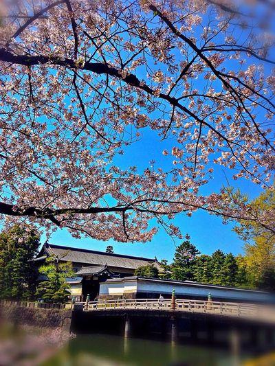 Flower Porn Cherry Blossoms EyeEm Flower Architecture Good night.