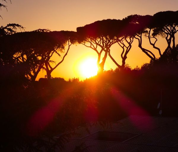 Sun kisses the greatest ☀️ Sunset Sun Sky Orange Color Nature Rome Sunlight Tranquil Scene Outdoors Landscape Tranquility Pinusmaritimus Wild Perspective Clear Sky Moments Adventure Magic Outstanding Skylovers Moving Around Rome