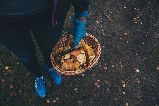 Assembling the mushrooms. Estonia Mushrooms New Photos Tallinn Autumn Basket Casual Clothing Day Food Food And Drink Freshness High Angle View Human Leg Low Section Men One Person Outdoors People Real People Standing