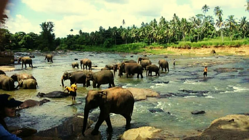 Asian elephants Travelphotography Animal Photography Animallovers