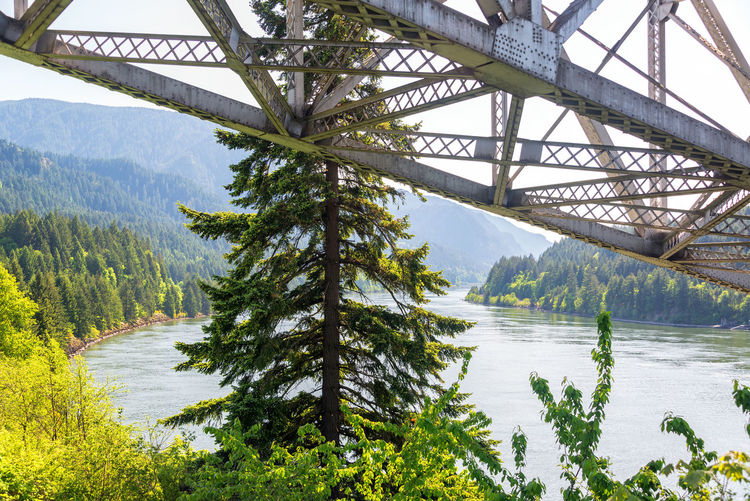 Architecture Beauty In Nature Bridge Bridge - Man Made Structure Bridge Of The Gods Built Structure Cascade Locks Columbia River Columbia River Gorge Day Forest Landscape Nature Nature Oregon Outdoors Pacific Northwest  River Scenics Sky Tourism Travel Travel Destinations Tree USA