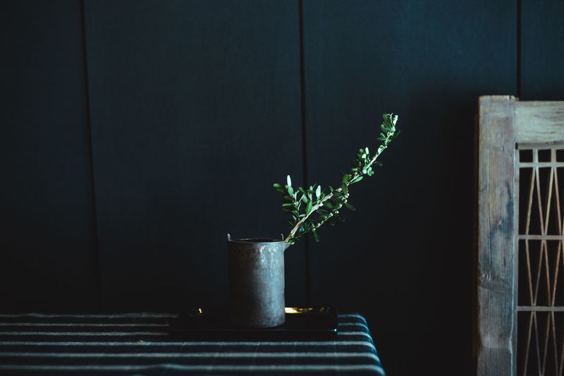 Close-up of potted plant on wall