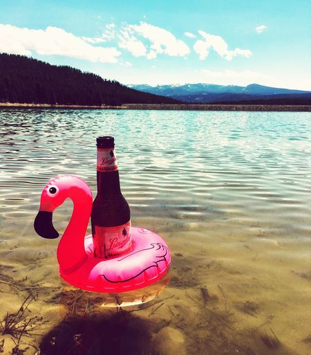 Floating Flamingo Sun Summertime Summer Beach Beer Water No People Sky Day Nature Cloud - Sky Lake Outdoors