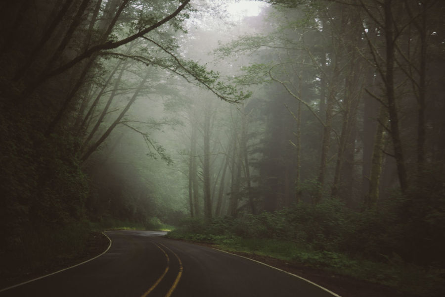 Foggy road Oregon Rain Beauty In Nature Branch Day Fog Forest Landscape Mist Nature No People Outdoors Road Scenics The Way Forward Tranquil Scene Tranquility Tree Woods