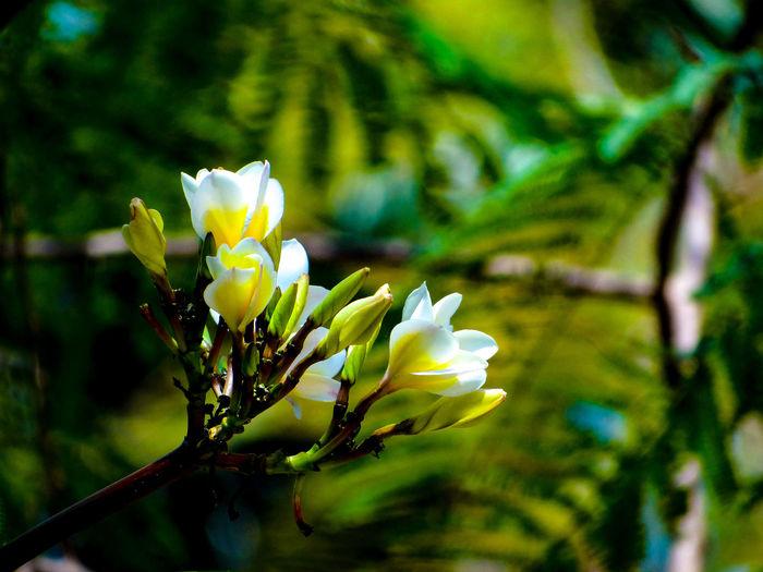 BLOSSOMING Flower Flower Head Close-up Plant Green Color Bud Sepal New Life Beginnings Blossom Blooming Petal Pollen Pistil Stem Stamen Plant Life In Bloom Plant Stem