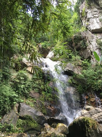 Beauty In Nature Day Forest Growth Nature No People Outdoors Scenics Tree Water Waterfall
