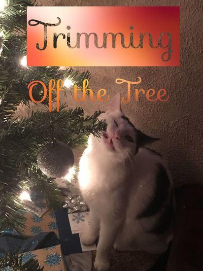 The Sparrow Christmas Tree Naughty Cat Christmas Cat ♡