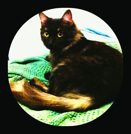 My Jewel My Princess Aka Jewel Pet Photography  Lazy Kitty Cute Pets My Little Princess ♡  Everday Joy Everyday Life My Girl ❤