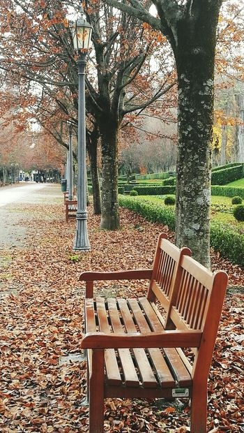 Tree No People Outdoors Bench Beauty In Nature Autumn Colors Autumn Pamplona Pamplona, Navarra Still Life Wooden Huawei Huawei P9 Leica Park Park Bench Parklife