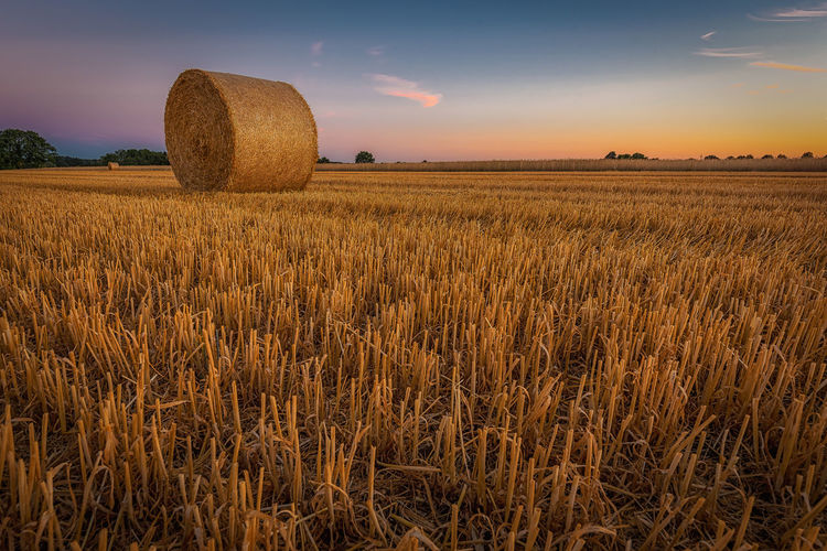 Straw bale on mowed field after sundown Field Agriculture Land Landscape Sky Rural Scene Plant Farm Scenics - Nature Tranquil Scene Beauty In Nature Environment Tranquility Sunset Bale  Nature Harvesting Idyllic Crop  No People EyeEmNewHere Straw Bale Straw Harvest Harvest Time