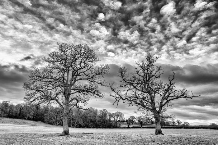 11_12 Trees Sky Blackandwhite Photography First Eyeem Photo
