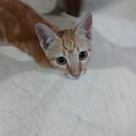 Pets Domestic Cat Looking At Camera Domestic Animals High Angle View Animal Themes Indoors  No People One Animal Lgv20photography Close-up Young Animal Kitten Ginger Cat Whisker Animal V20