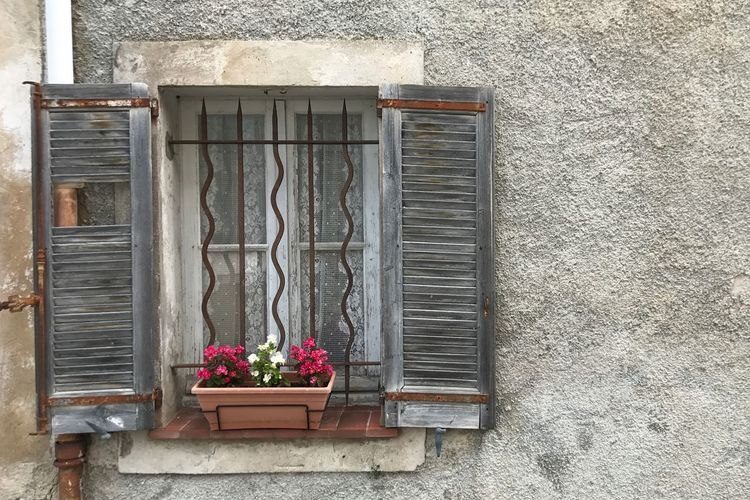 Potted plant by window on wall
