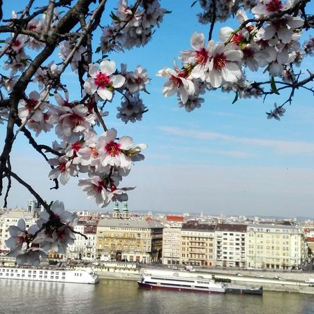 Flowers over the city. Budapest Danube River Sky City Almond Tree Branch Blooming Flowers Beauty In Nature Nature In The City View Outdoors Urban Skyline Springtime Cityscape