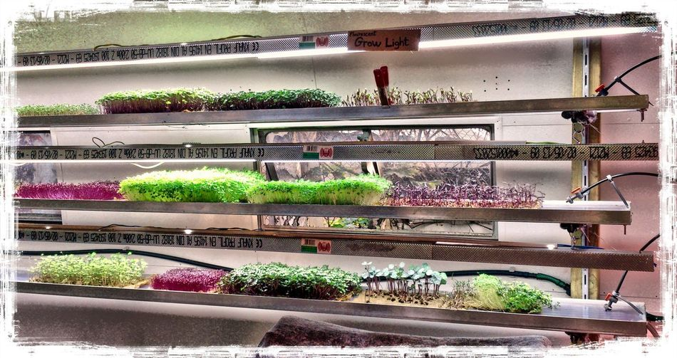 Grüner Kindergarten Urban Gardening Watching Plants Grow