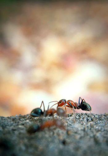 Ants On Field