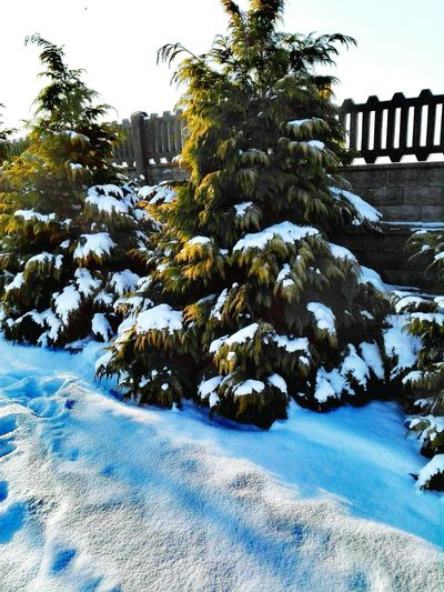 Winter Tree Snow Cold Temperature No People Nature Day Outdoors Beauty In Nature Green Color Nature White