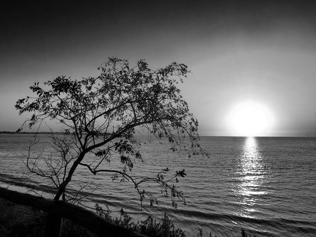 Beach Beauty In Nature Black And White Clear Sky Day Fujifilm Fujifilm_xseries Fujifilmx Horizon Over Water Landscape Nature No People Outdoors Scenics Sea Silhouette Sky Sun Tranquil Scene Tranquility Tree Water