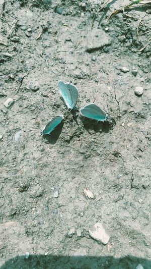 бабочки кавказ