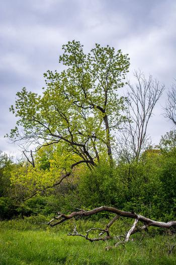 Tree by plants growing on field against sky