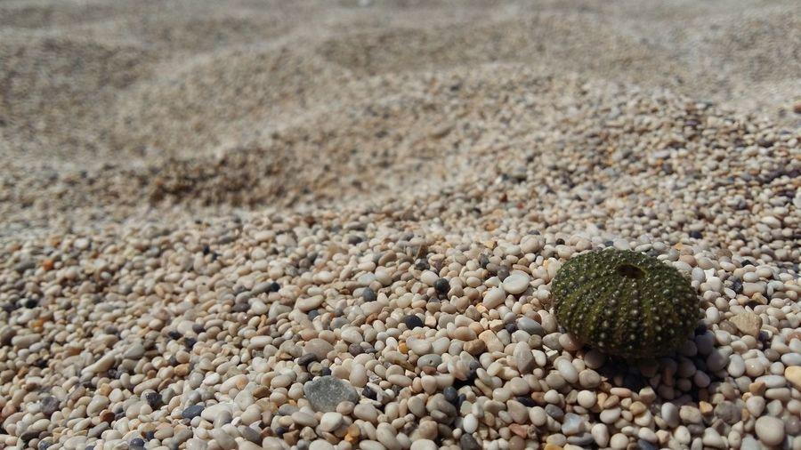 High angle view of sea urchin on pebbles