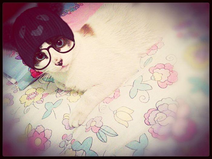 my cat Sweetie Hipstercat :3 Baby ❤