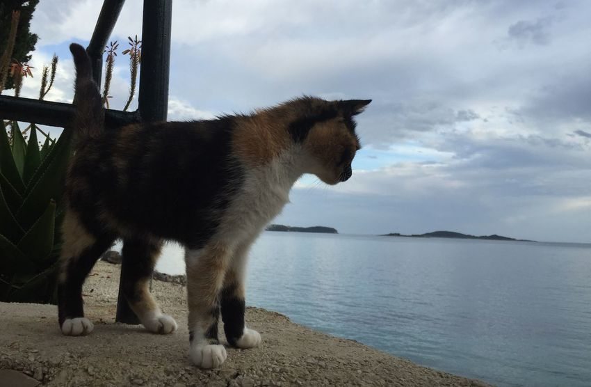 Croatian Cat♡ watching at The Sea in Croatia , Croatia ♡ Croatia ❤ , Katze Am Meer in Kroatien in Mlini , Čibača , Meer Meerblick , Katzen 💜 Katzen Cats 🐱 Cat Watching , Chat en Croatie , Chats Iphonegraphy Without Filter Without Filters Ohne Filter Sans Filtre