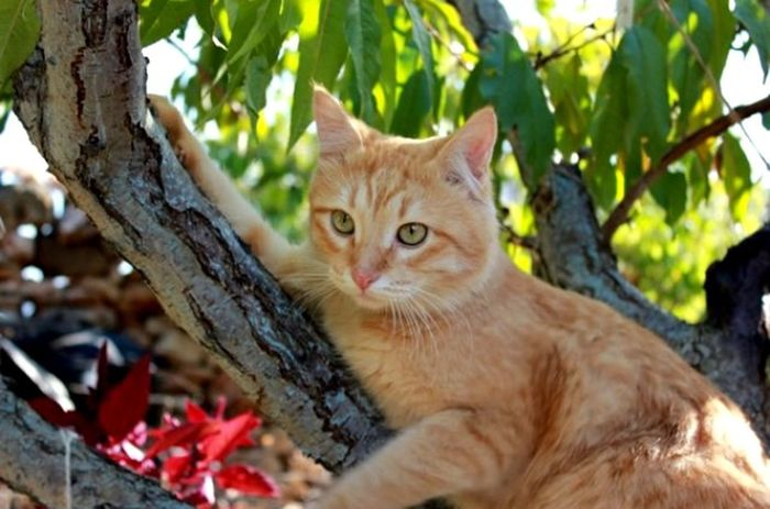 Cat Áfonya рыжий кот Афоня Afonsiko Cats Cat♡