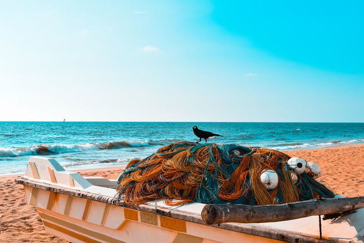 Bird with nets on boat at beach